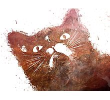Ginger cat Photographic Print