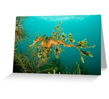 Leafy Seadragon Greeting Card