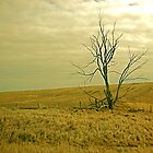 Lone tree by lexphoto