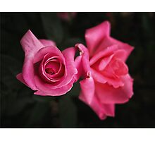 Pink Rose Sisters Photographic Print