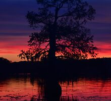Cypress Sunset by aubrey-pitts