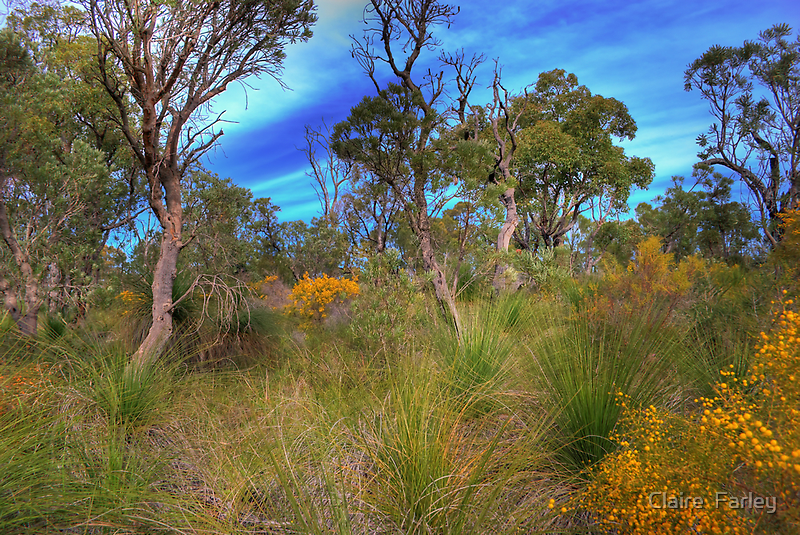 Colourful Bush by Claire  Farley