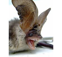Bat out of Hell Photographic Print