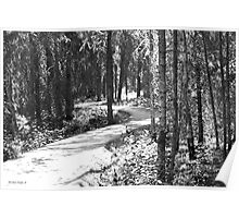 Curves In The Path Poster
