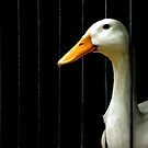 ~When Ducks Go Bad~ by a~m .