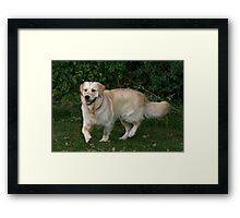 Bumble Boy Framed Print