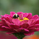 Mr. Bumble by BigD