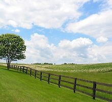 Country Scene by Travis Hammond