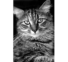 King Louie Photographic Print