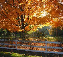 Fall Scene by Travis Hammond