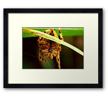 Come into my Web Framed Print