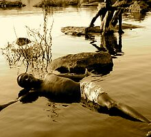 niger river by hemedyphilippe
