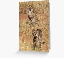 CHEETAHS - NAMIBIA Greeting Card