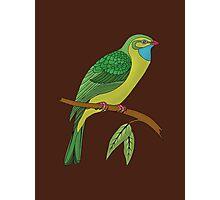 green domestic bird 2 Photographic Print