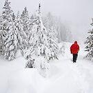 Trail Blazin' by Gary Lengyel