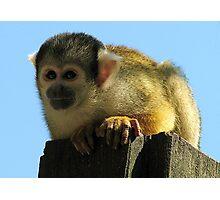 Squirrel monkey Photographic Print