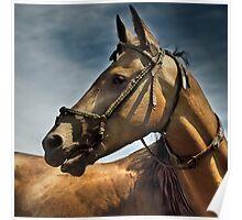 akhal-teke stallion  Poster
