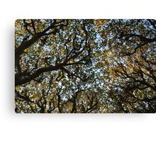 Twisting branches Canvas Print