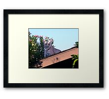 Well... Hello there. Framed Print