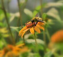 Busy Bee!  by AngelPhotozzz