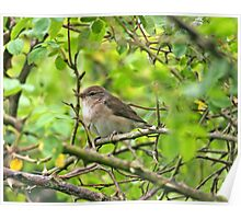 Garden Warbler Poster