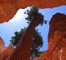 Bryce Canyon - Wallstreet by Luke Brannon
