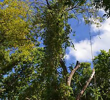 Green Trees and Blue Sky by jncphotography