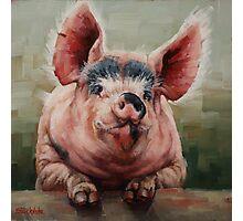 Friendly Pig Photographic Print