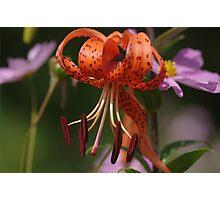 My Garden Delight Photographic Print