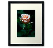 Delight In Beauty Framed Print