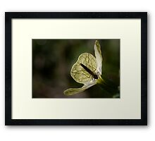 Dawn Awakening Framed Print