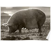 Oink! Poster