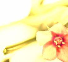 Origanum Flower Sticker
