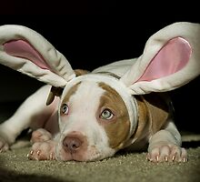 Rabbit Pup  by ToddDuvall