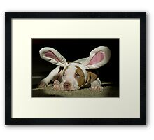 Rabbit Pup  Framed Print