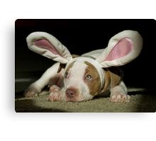 Rabbit Pup  Canvas Print