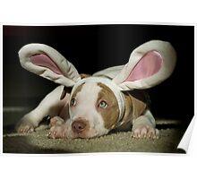 Rabbit Pup  Poster