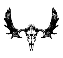 Moose Skull and Antlers by huntandhound