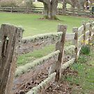 poor wobbly fence! with bright daffodils  by gaylene