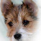 Tori Puppy  by tess1731