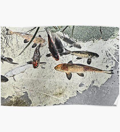 Frogmeadow Koi #1 Poster