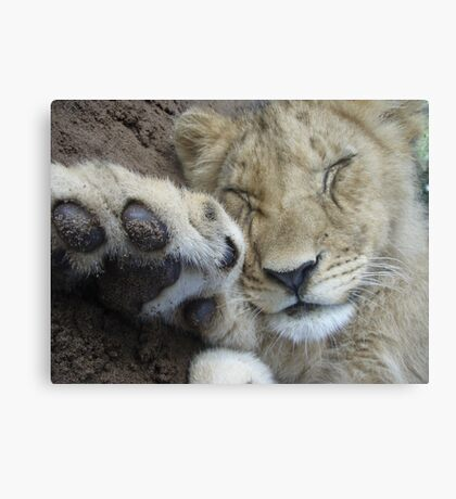 Sleeping Cub Canvas Print