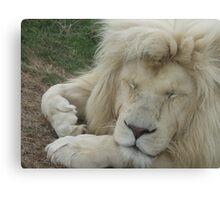 Sleeping White Lion Canvas Print