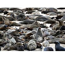 Cape Fur Seals - Namibia Photographic Print