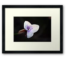 Wildflower Season 2 Framed Print