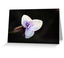 Wildflower Season 2 Greeting Card
