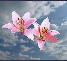 lys flowers by artandme