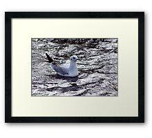 Seagull #1 Framed Print