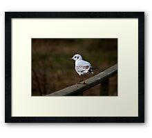 Seagull #2 Framed Print