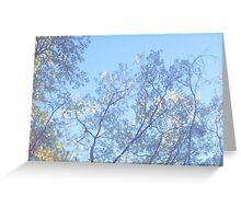 Cameron Park Trees Greeting Card